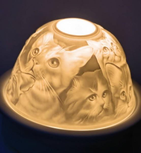 Katzen, Starlight-Teelicht